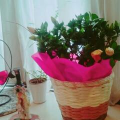 まめちゃん/お母さんありがとう/くちなしの花/母の日/こんにちは こんにちは🍀  今日は母の日。  子供達…