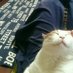癒しの時間/癒しの場所/まったり/膝の上/まめちゃん/猫 おはようございます🍀  ふふ、今日は私だ…