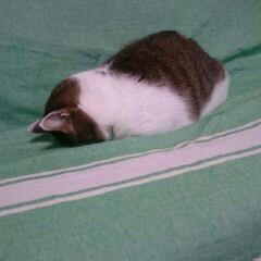 寝てる/まめちゃん/猫 こんばんは☺ 今日もお疲れ様です😌  ま…