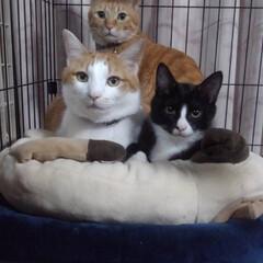 猫派/にゃんこ同好会 我が家の大事な家族! ちょっとおすまし!(1枚目)