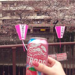 中目黒/桜/春のフォト投稿キャンペーン/LIMIAごはんクラブ/LIMIAおでかけ部/フォロー大歓迎/... yayyyy🍨