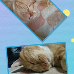 愛猫/猫派 トラのアホ顔(≧∇≦)ブヒャヒャヒャ …