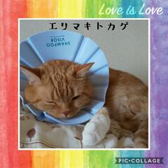 皮膚治療中/癒し系/愛猫 トラニャンのエリマキトカゲ(笑)💦  1…