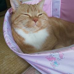 癒し系/愛猫 鬼子お姉ちゃんがくれたキティちゃんBox…