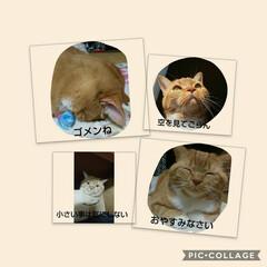 スタンプ/癒し系/愛猫 トラちゃんスタンプꉂ(ˊᗜˋ*)ヶラヶラ…