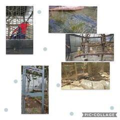 動物園/LIMIAおでかけ部/ハンドメイド/猫/スイーツ 地元の無料動物園にキタ━(゚∀゚)━!ほ…