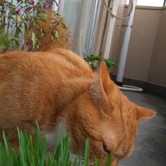猫好きさん LIMIAいつから始めたのか過去投稿見に…(3枚目)