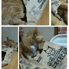 猫派/令和の一枚/にゃんこ同好会/至福のひととき もぅ➰砂の補充していたら😵😩 袋の中へダ…