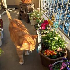 お気に入りの空間/ガーデニング/愛猫 暖かい1日でした(*^^*) まぁ背丈の…(2枚目)