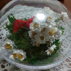 花かんざしドライ/さかな/編みぐるみ/ハンドメイド 25センチぐらいの編みぐるみ🐟バージョン…(2枚目)