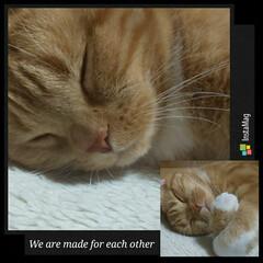 立ち耳スコティッシュフォールド/癒し猫/愛猫 こんにちは❀(*´▽`*)❀ 昨日今日は…