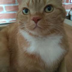 癒し/愛猫/猫/購入品 こんにちはヽ(^0^)ノ 午後から薄日が…