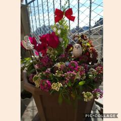 雰囲気だけでも/Xmas寄せ植え/ベランダ 2020年……今年も沢山のお花を育てて来…(1枚目)
