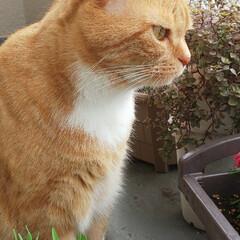 猫好きさん LIMIAいつから始めたのか過去投稿見に…(2枚目)
