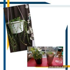 多肉植物/ハンドメイド/猫 植え替え終了~挿し芽🌱でドンドン増えてく…