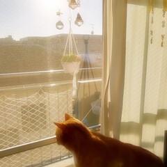冬/おうち/猫 キラキラサンキャッチャー&トラ🐈️💕 今…