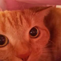 癒し系/愛猫好きすぎ 構って貰えないから…… 1人遊び🤔(〃艸…