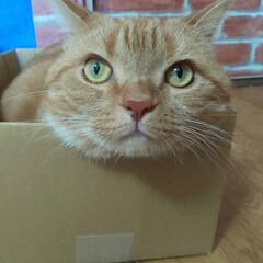 癒し/愛猫/猫 今朝のトラでございます!  ナマモノです…
