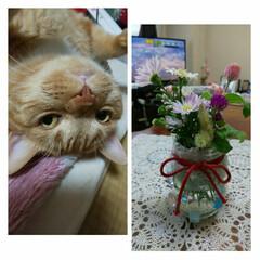 小さな花瓶/猫好きさんと繋がりたい/スコティッシュフォールド立ち耳 こんにちは(*^▽^)ノ 何とか🌪🌚🌪は…