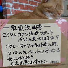 癒し/愛猫 ダンボールハウスで遊んじゃった😆🤣  ……
