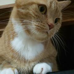 ネコ好き ニャマゾンハウスのある,押し入れの上から…