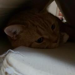 猫派/令和の一枚/にゃんこ同好会/至福のひととき 静かでどこにいるか探してたら🤭ジャンプす…