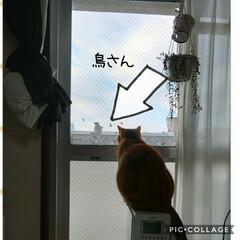 愛猫/立ち耳スコティッシュフォールド/猫好き おはようございます☀︎*.。 トラ警備台…