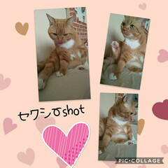 猫バカ/猫好き セクシーshotパチ /■\_・) 熟…
