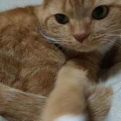 猫好きさん LIMIAいつから始めたのか過去投稿見に…
