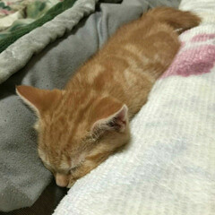 赤ニャン/愛猫 懐かしい写メ見つけました(〃艸〃) トラ…