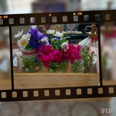 ガーデニング/花のあるくらし/ハンドメイド/猫/ダイソー 今朝の切り戻した花&いち早く咲いた🌷 八…
