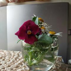 ノースポール/ビオラのある暮らし/花殻つみ/住まい 剪定してきたモノを最後、愛でる為に小さな…