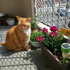 癒し/愛猫 今日のトラを貼っておきます……  フゥ〜…