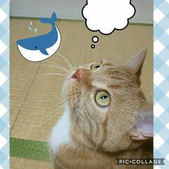 猫好きにはたまらない/猫すき トラの真剣な表情…… 何を見上げてるのか…