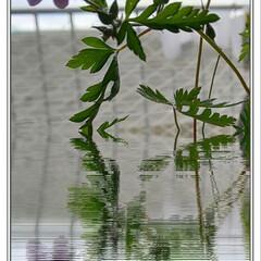 可憐/雑草/花を飾る/にゃんこ同好会 土曜日にタンポポと一緒に抜いてきた雑草😃…