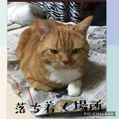 あけおめ/フォロー大歓迎/冬/おうち/ペット/ペット仲間募集/...