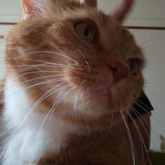 猫ばか/猫好きさんと繋がりたい 昨日、パパが出発する前…恒例のなでなでタ…