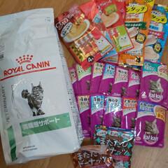 癒し/愛猫/猫/購入品 こんにちはヽ(^0^)ノ 午後から薄日が…(4枚目)