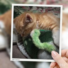 ペット/ハンドメイド/猫/おやすみショット うちの子おやすみショットに応募してます💤…