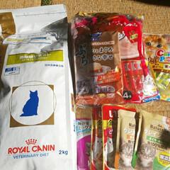 チュールセット/ロイヤルカナン/愛猫 アチュイ…(*﹃*;)  上着脱いで🚴走…