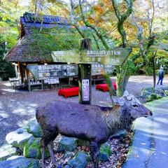 奈良公園 鹿 紅葉/リミアの冬暮らし 雄しかが微動だにせず、一点を見つめていま…