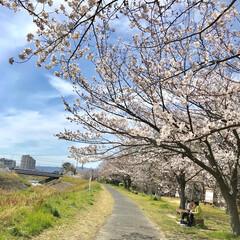春のフォト投稿キャンペーン/春の一枚 家の近くも満開になりつつあります