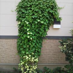 ソープディッシュ/メイクルーム/洗面所大公開/洗面道具/洗面所は綺麗に使おう 庭の雑草がどんどん伸びて、とうとう窓を埋…