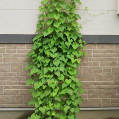 夏対策/梅雨/梅雨対策/雨対策/梅雨対策アイテム/梅雨便利グッズ 庭の雑草がぐんぐん伸びて、あっという間に…