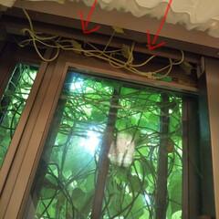 ソープディッシュ/メイクルーム/洗面所大公開/洗面道具/洗面所は綺麗に使おう 庭の雑草がどんどん伸びて、とうとう窓を埋…(3枚目)