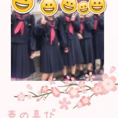 中学生/セーラー服/入学式 孫の入学式 今時珍しいセーラー服 みんな…