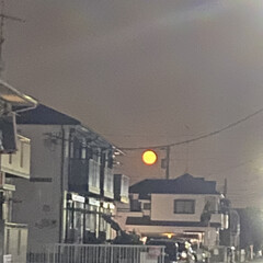 「今夜の月も綺麗」(1枚目)