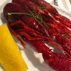 イケア ザリガニ=🦐+🦀 今年初めてIKEAで食…