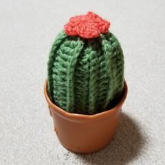 サボテン/あみぐるみ/カギ針編み/編み物/編みサボテン はじめてカギ針編みに挑戦☺ 編みサボテン🌵