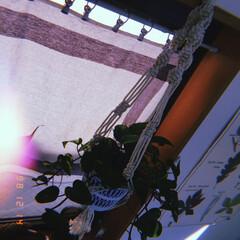 グリーン/吊るす/コットンロープ/プラントハンガー/マクラメ編み/雑貨/... マクラメ編み✨ 面白い✨💕😆